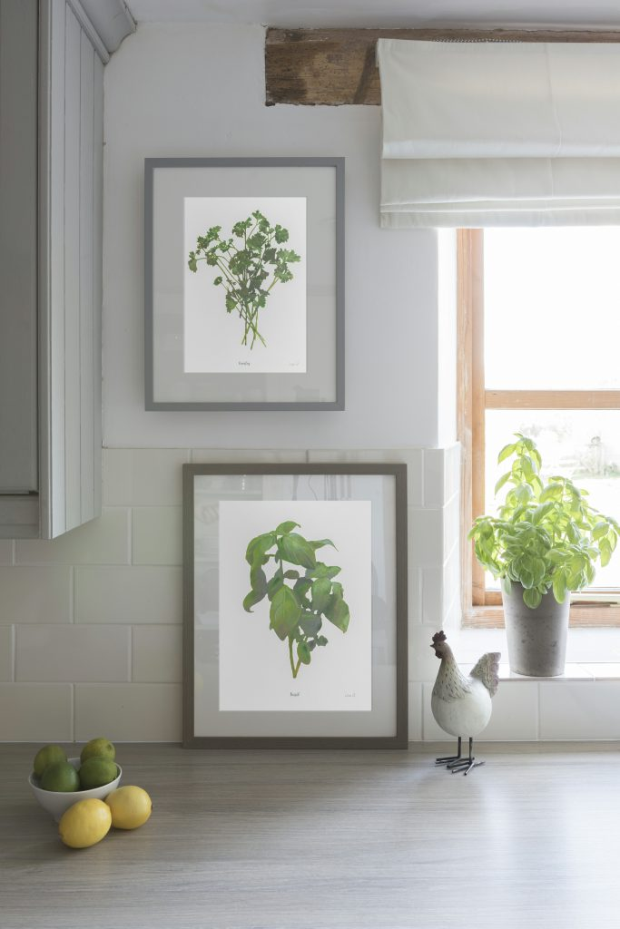 Botanical Art Elements Herbs Prints