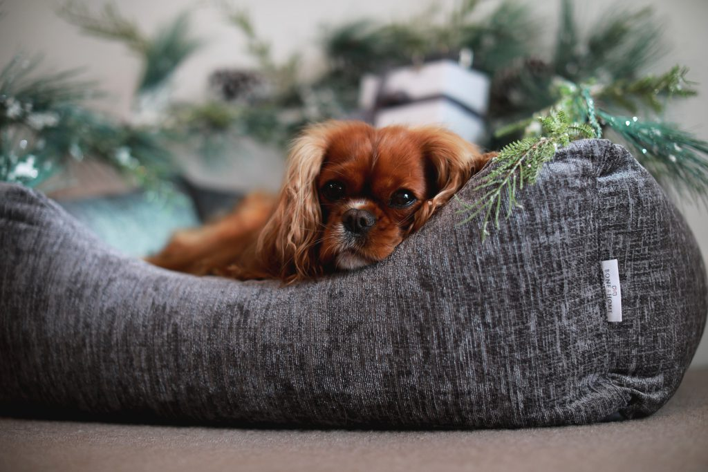 The Sloane Settee Midnight Grey Bone and Home Luxury Dog Bed