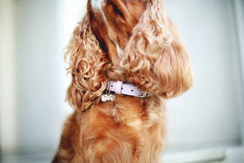 The Cheltenham Collar Blush Pink Luxury Leather Dog Collar Bone and Home
