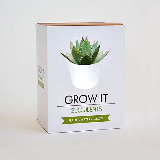 Succulent Grow Kit Blackdown Lifestyle Notonthehighstreet