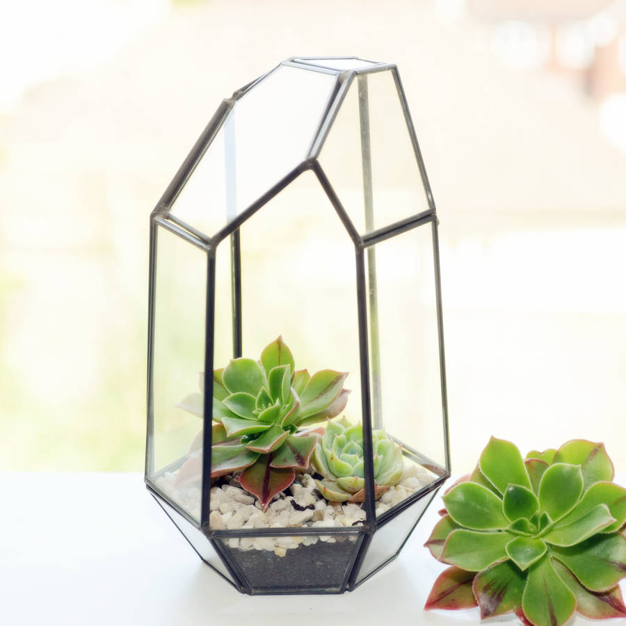 What Is A Terrarium Bring Your Home To Life With An Indoor Garden