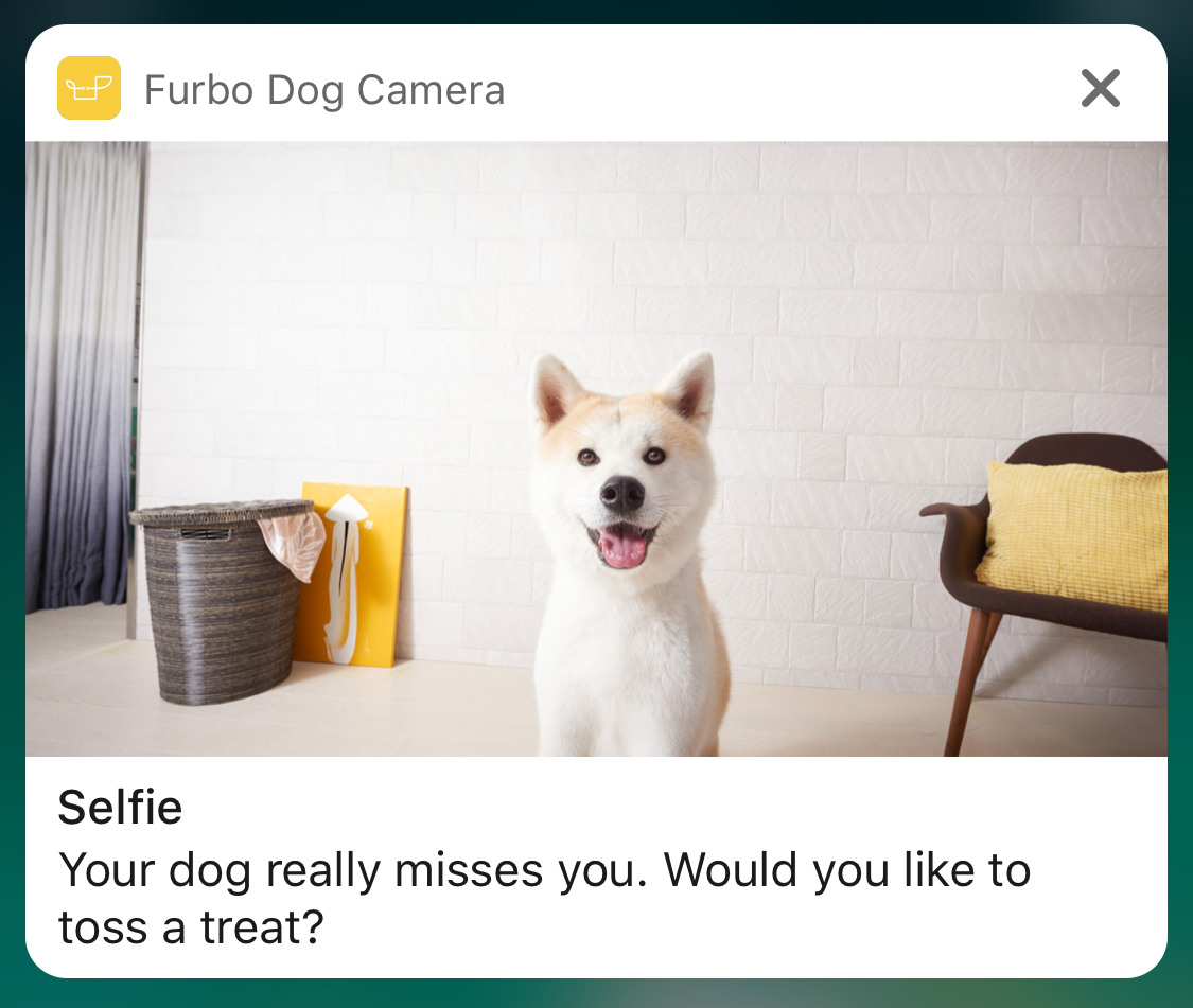 Dog Selfie Camera