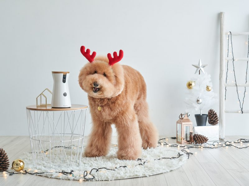 Interactive Dog Camera Christmas Gift